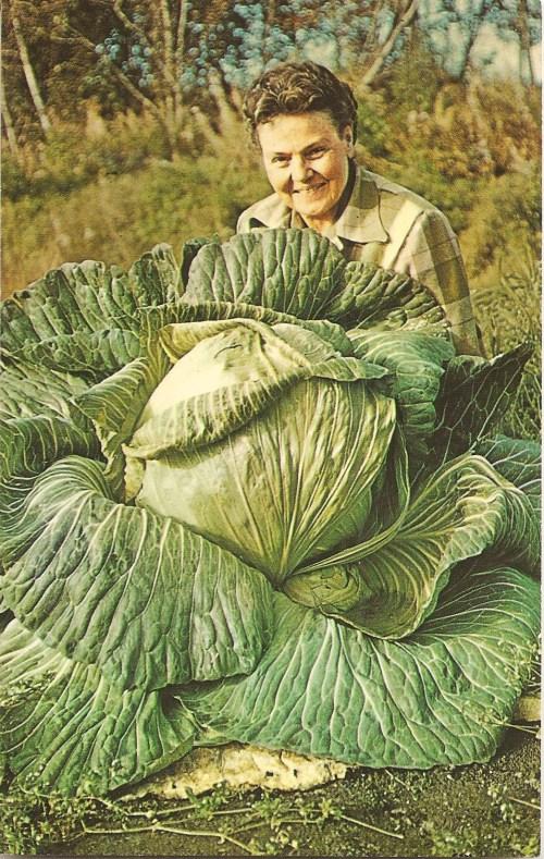 44 lb. Alaska Cabbage 001 (2)