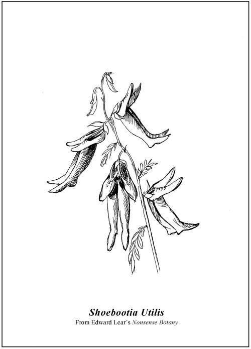 Edward Lear's Shoebootia Utilis