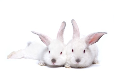 Two Like Puff (for Part Two)  (123RF stock photo)