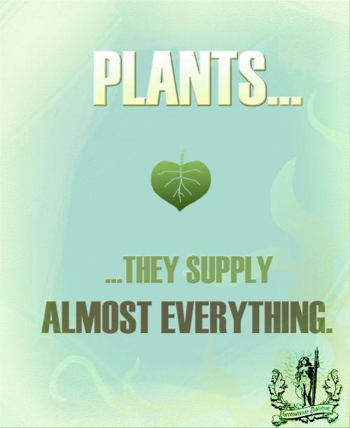 Zera Pin - Plants They Supply