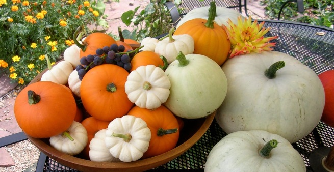 pumpkins and dahlias.JPG
