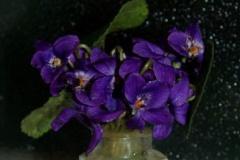 violets4HallPS