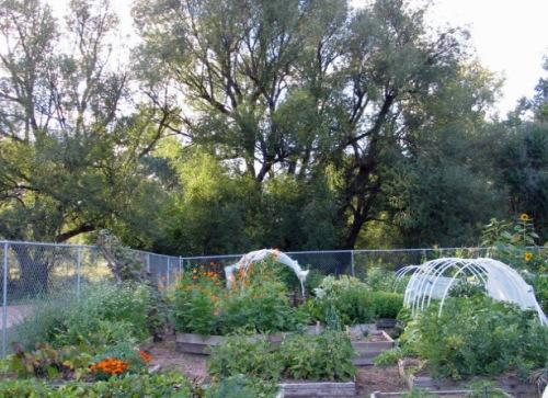 vermijo-garden-8-28-10-0051 (1)