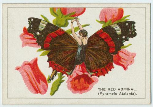 The red admiral