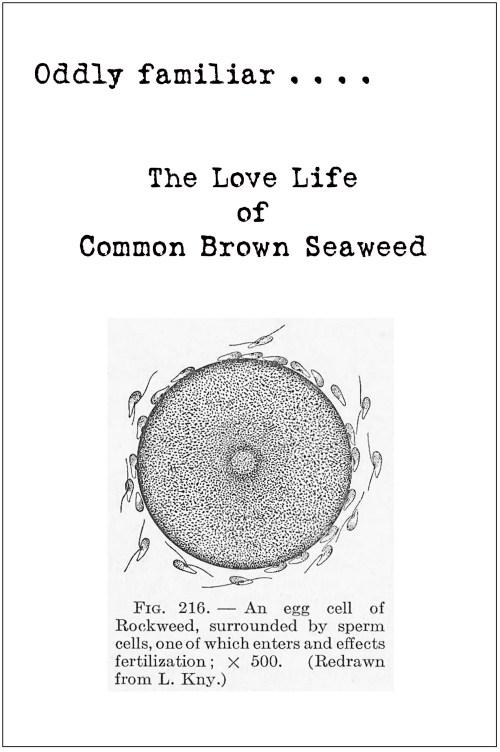 seaweed comic (2)