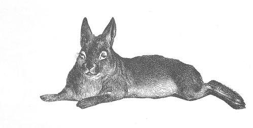 rabbit 001 (2)
