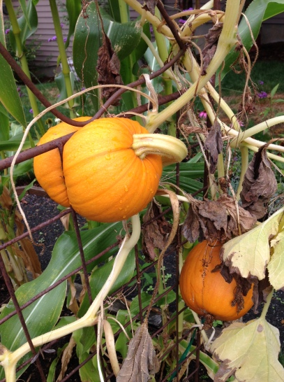 tricia-knoll-pumpkin-squeeze