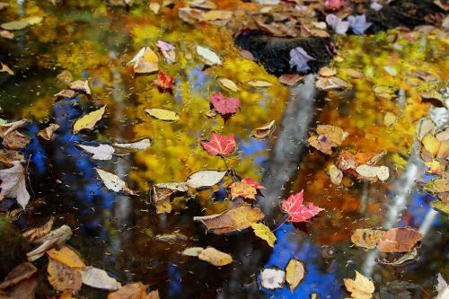 1024px-fall-leaves-floating_-_west_virginia_-_forestwander-2