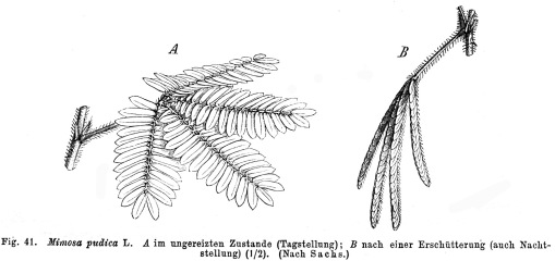 florasforum