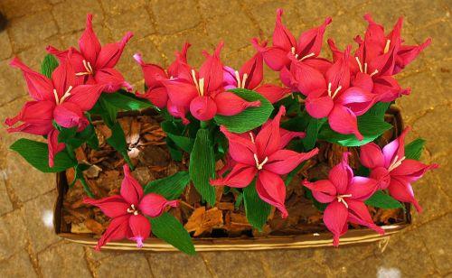 crepe_paper_flowers_2