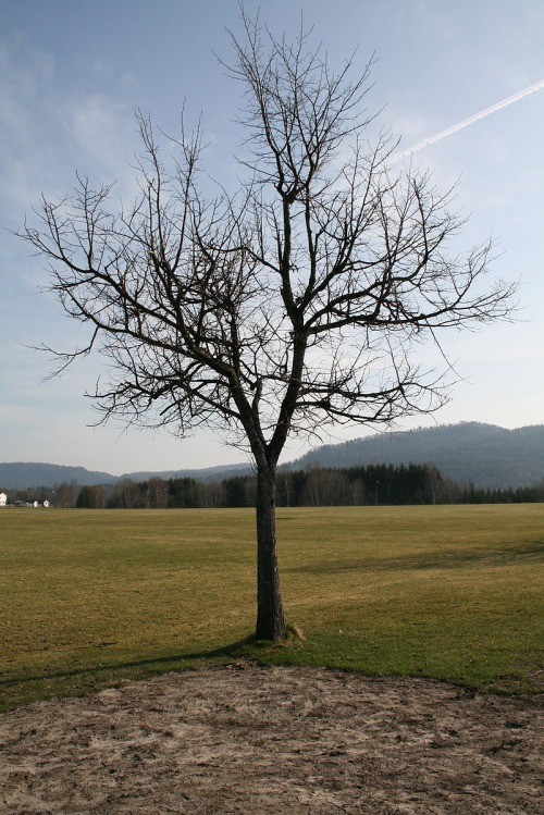tree_without_leaves_reidar-lunde-lillestol-relilles