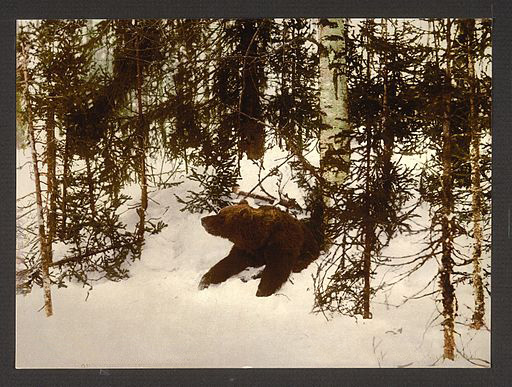 A_bear_coming_out_of_his_den,_Russia-LCCN2001697542 (2)