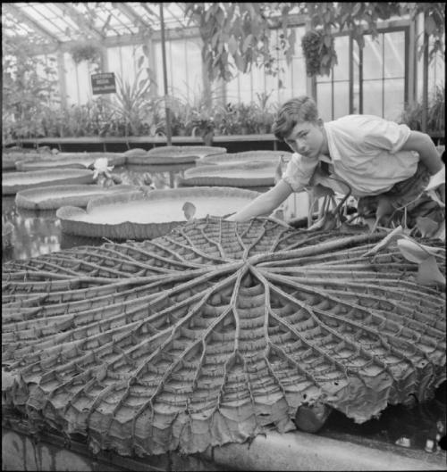 The_Gardens_of_Kew-_the_work_of_Kew_Gardens_in_Wartime,_Surrey,_England,_UK,_1943_D16496 (2)