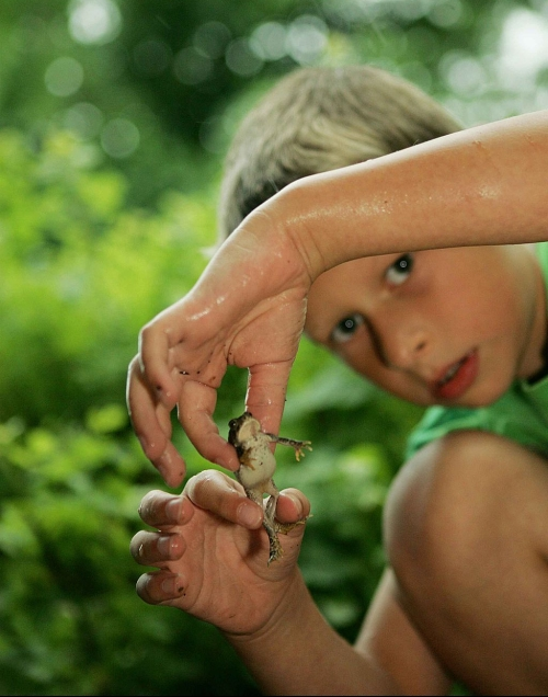 Cute_child_boy_playing_with_frog_U.S._Fish_and_Wildlife