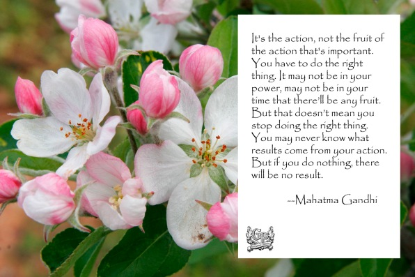 Apple_blossoms_Gandhi copy