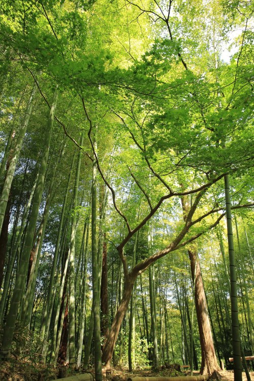 Bamboo_and_tree_canopy_Unsplash-2015-WC