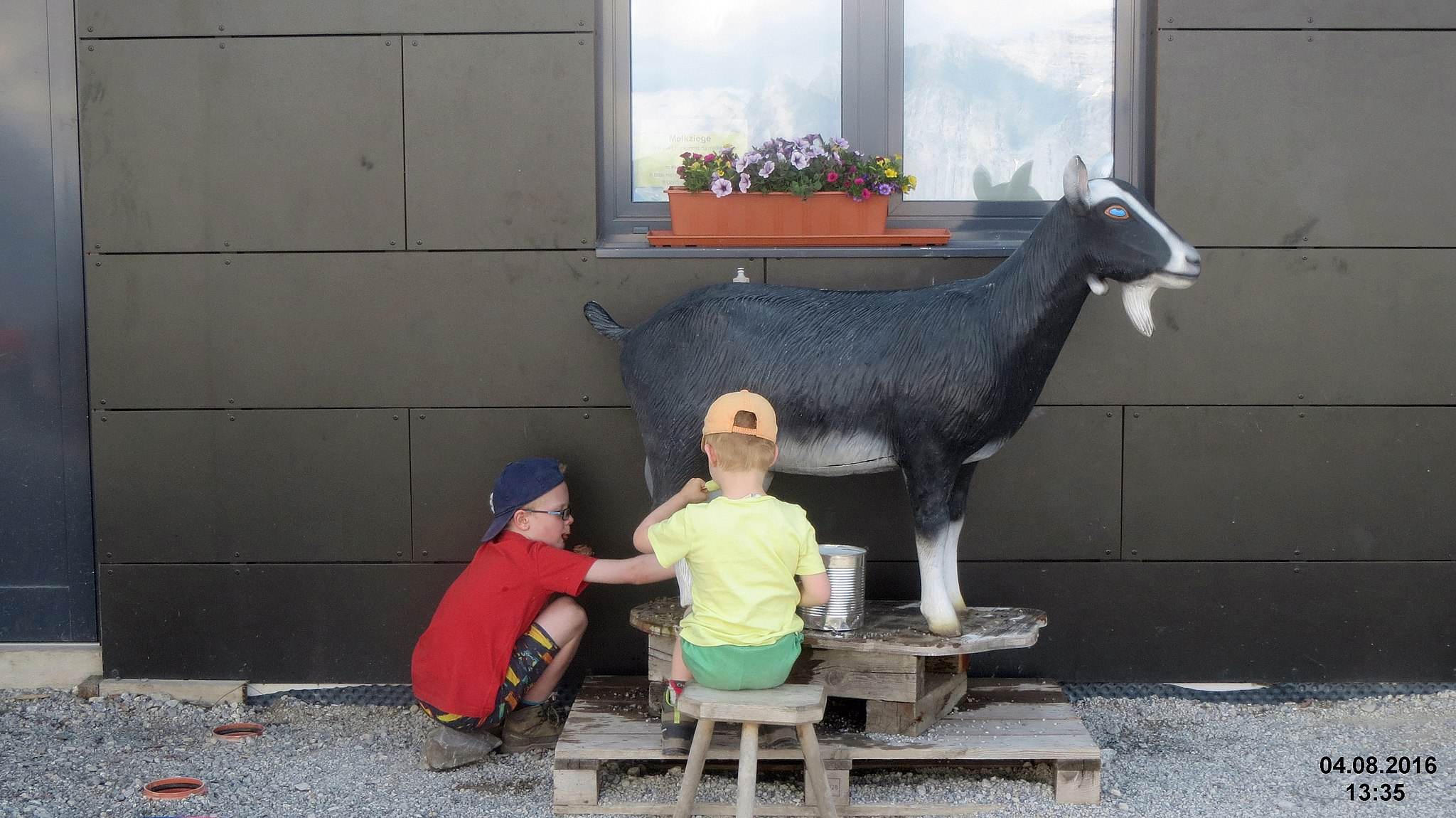 Milking_an_artificial_goat_at_Grubighütte_(31816547712)_WC